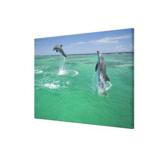 Bottlenose Dolphins Tursiops truncatus) 10 Gallery Wrap Canvas