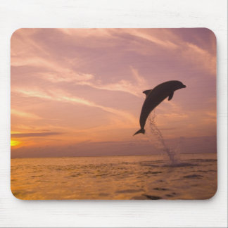 Bottlenose Dolphins Tursiops truncatus) 10 Mouse Pad