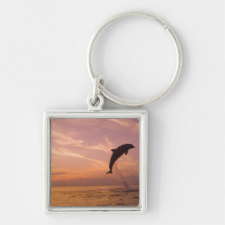 Bottlenose Dolphins Tursiops truncatus) 10 Silver-Colored Square Key Ring