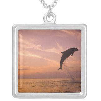 Bottlenose Dolphins Tursiops truncatus) 10 Silver Plated Necklace