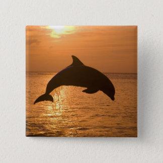 Bottlenose Dolphins Tursiops truncatus) 11 15 Cm Square Badge