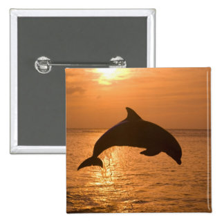 Bottlenose Dolphins Tursiops truncatus) 11 15 Cm Square Badge