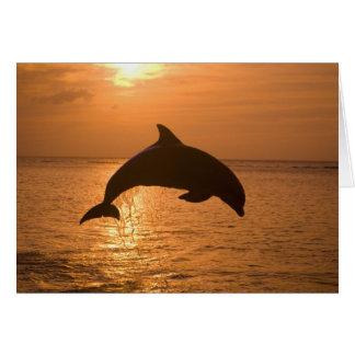Bottlenose Dolphins Tursiops truncatus) 11 Card