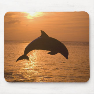 Bottlenose Dolphins Tursiops truncatus) 11 Mouse Mat