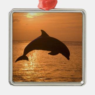 Bottlenose Dolphins Tursiops truncatus) 11 Silver-Colored Square Decoration