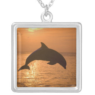 Bottlenose Dolphins Tursiops truncatus) 11 Silver Plated Necklace