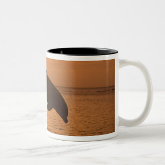 Bottlenose Dolphins Tursiops truncatus) 11 Two-Tone Coffee Mug