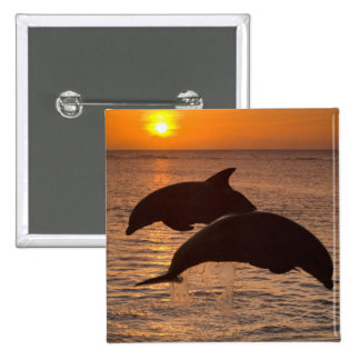 Bottlenose Dolphins Tursiops truncatus) 12 15 Cm Square Badge