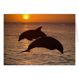 Bottlenose Dolphins Tursiops truncatus) 12 Greeting Card