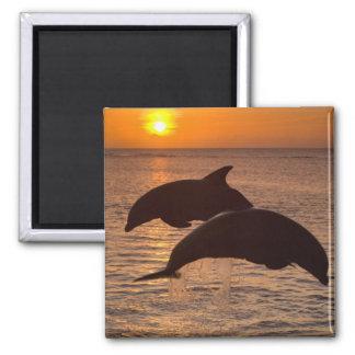 Bottlenose Dolphins Tursiops truncatus) 12 Magnet