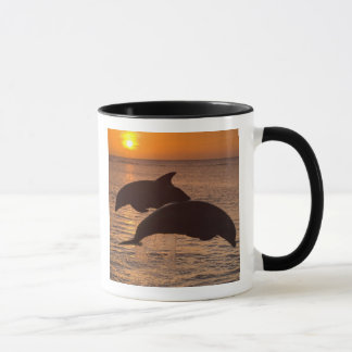Bottlenose Dolphins Tursiops truncatus) 12 Mug