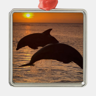 Bottlenose Dolphins Tursiops truncatus) 12 Silver-Colored Square Decoration