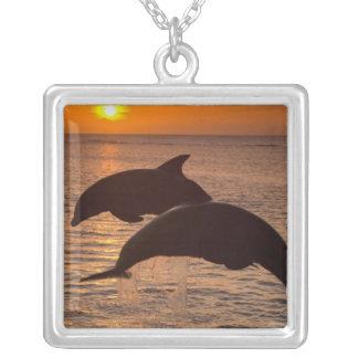 Bottlenose Dolphins Tursiops truncatus) 12 Square Pendant Necklace