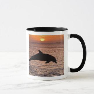 Bottlenose Dolphins Tursiops truncatus) 13