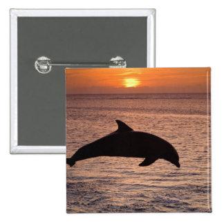 Bottlenose Dolphins Tursiops truncatus) 13 15 Cm Square Badge
