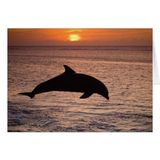 Bottlenose Dolphins Tursiops truncatus) 13 Card