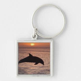 Bottlenose Dolphins Tursiops truncatus) 13 Key Chain