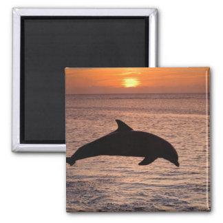 Bottlenose Dolphins Tursiops truncatus) 13 Magnet