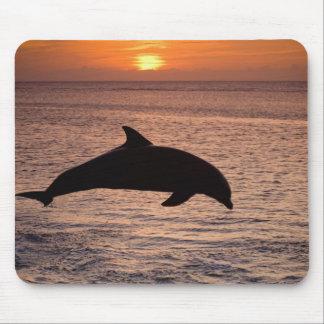 Bottlenose Dolphins Tursiops truncatus) 13 Mouse Pad