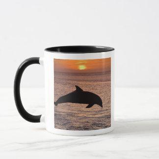 Bottlenose Dolphins Tursiops truncatus) 13 Mug