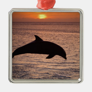 Bottlenose Dolphins Tursiops truncatus) 13 Silver-Colored Square Decoration
