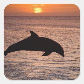 Bottlenose Dolphins Tursiops truncatus) 13 Square Sticker