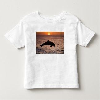 Bottlenose Dolphins Tursiops truncatus) 13 Toddler T-Shirt
