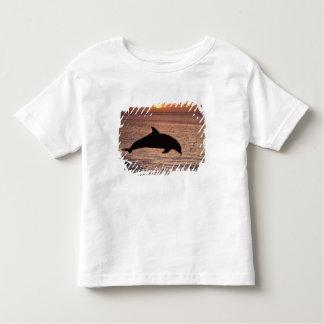 Bottlenose Dolphins Tursiops truncatus) 13 Tshirts