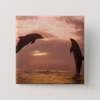 Bottlenose Dolphins Tursiops truncatus) 14 15 Cm Square Badge