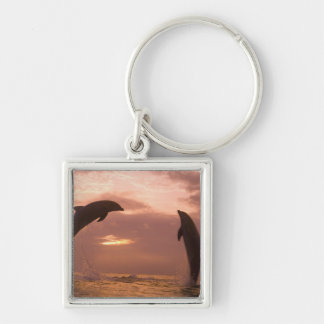 Bottlenose Dolphins Tursiops truncatus) 14 Silver-Colored Square Key Ring