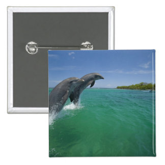 Bottlenose Dolphins (Tursiops truncatus) 15 Cm Square Badge