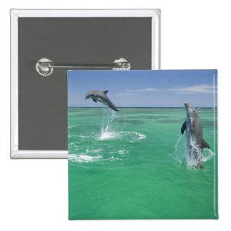 Bottlenose Dolphins Tursiops truncatus) 17 15 Cm Square Badge