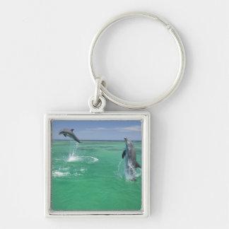 Bottlenose Dolphins Tursiops truncatus) 17 Key Ring
