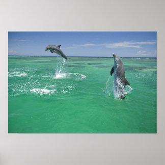 Bottlenose Dolphins Tursiops truncatus 17 Posters