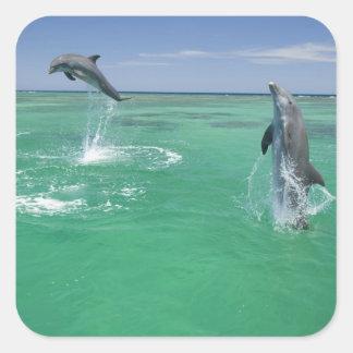 Bottlenose Dolphins Tursiops truncatus) 17 Square Sticker
