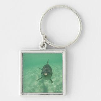 Bottlenose Dolphins Tursiops truncatus) 18 Key Ring