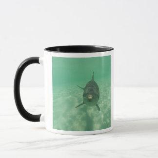 Bottlenose Dolphins Tursiops truncatus) 18 Mug