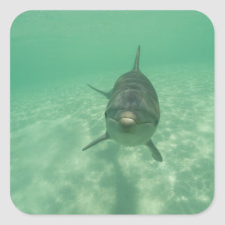 Bottlenose Dolphins Tursiops truncatus 18 Stickers