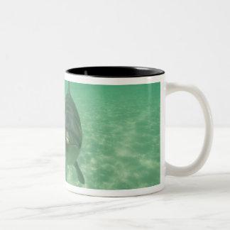 Bottlenose Dolphins Tursiops truncatus) 18 Two-Tone Coffee Mug