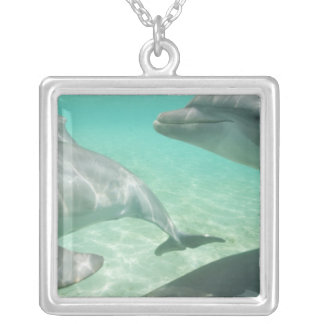 Bottlenose Dolphins Tursiops truncatus) 19 Silver Plated Necklace