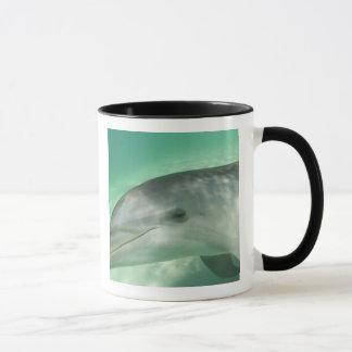 Bottlenose Dolphins Tursiops truncatus) 20 Mug