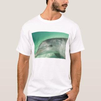Bottlenose Dolphins Tursiops truncatus) 20 T-Shirt