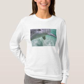 Bottlenose Dolphins Tursiops truncatus) 21 T-Shirt