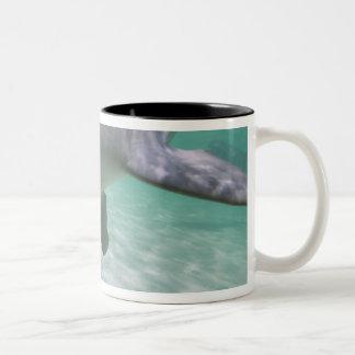 Bottlenose Dolphins Tursiops truncatus) 21 Two-Tone Coffee Mug