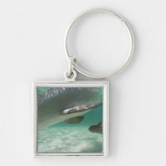 Bottlenose Dolphins Tursiops truncatus) 22 Key Ring