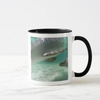 Bottlenose Dolphins Tursiops truncatus) 22 Mug