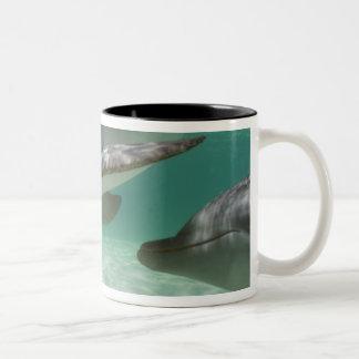 Bottlenose Dolphins Tursiops truncatus) 22 Two-Tone Coffee Mug