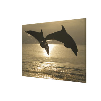 Bottlenose Dolphins Tursiops truncatus) 23 Stretched Canvas Print