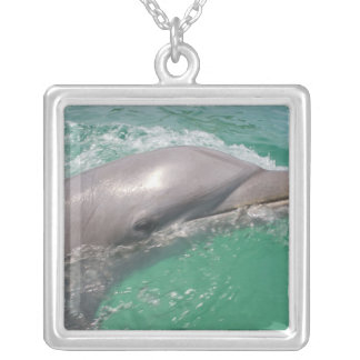 Bottlenose Dolphins Tursiops truncatus) 23 Silver Plated Necklace