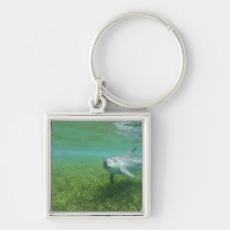 Bottlenose Dolphins Tursiops truncatus) 24 Silver-Colored Square Key Ring